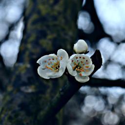nature flower closeup hdr freetoedit