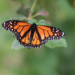 freetoedit depthoffield butterfly butterflylove vividcolor