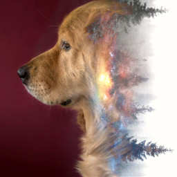 freetoedit dog fade tutorial galaxy
