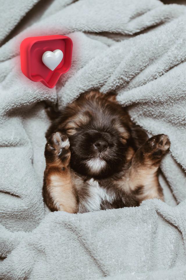 #freetoedit #puppy #cute #heartbubble
