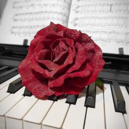 freetoedit likeit vote pianokeys redrose pcsinglestilllife