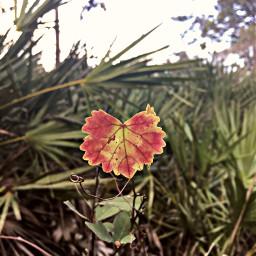 freetoedit nature leaf green