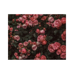 flowers pattern background freetoedit