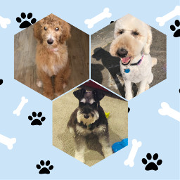 doggie puppy dogs friends ilovedogs freetoedit