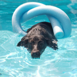 myphoto myphotography pool picoftheday dog freetoedit pcpicsartpets picsartpets createfromhome stayinspired