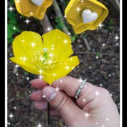 freetoedit flower yellow 💛💛 srclikebubble