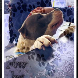 puppylove pitbull heartfilled caligirl workflow freetoedit