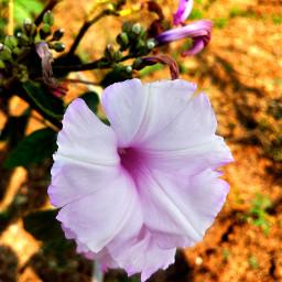 nature flowerphotography naturalbeauty flowerpower freetoedit