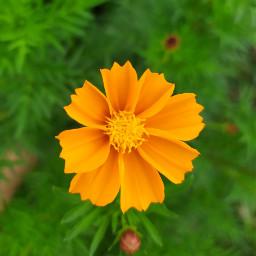 flower🧡 orangeflower orange flower