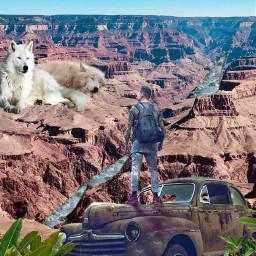 grandcanyon wolf nature