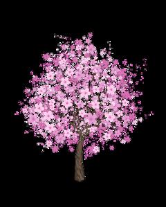 cherryblossoms cherryblossom cherrytree tree pinktree freetoedit