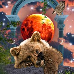 freetoedit bear moon lune butterfly