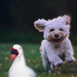 freetoedit fear dog bird frightening scared scary scare