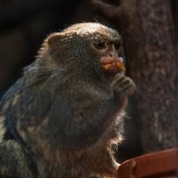freetoedit photography monkey cute petsandanimals