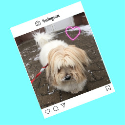 freetoedit dog cotondetulear winter neonheart