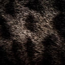 cotacachi imbabura ecuador animals cat freetoedit