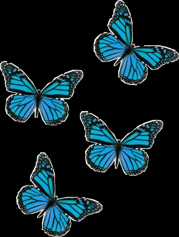 #butterfly #aesthetic #blue #freetoedit