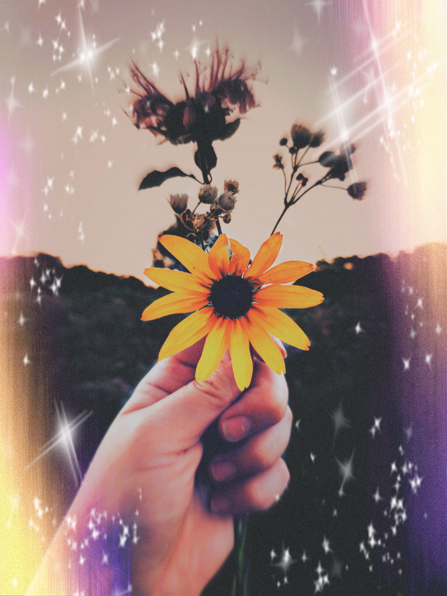 #freetoedit  be the yellow in someones life☺️💛