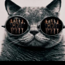 freetoedit ecpussycatdolls pussycatdolls