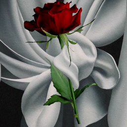 freetoedit elegance redrose rose passion