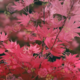 pink leaves bush cherryblossom aesthetic freetoedit