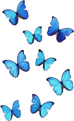 blue butterfly vsco aesthetic monarch freetoedit