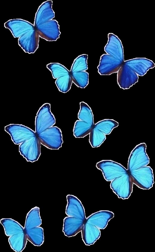 #blue #butterfly #vsco #aesthetic #monarch #interesting #art #meme #turquoise #freetoedit
