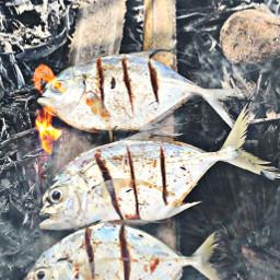 freetoedit seafood fish