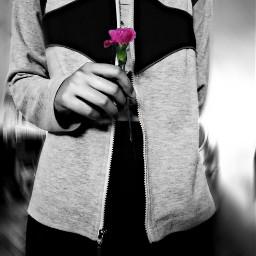photography justme blackandwhite flower picsart