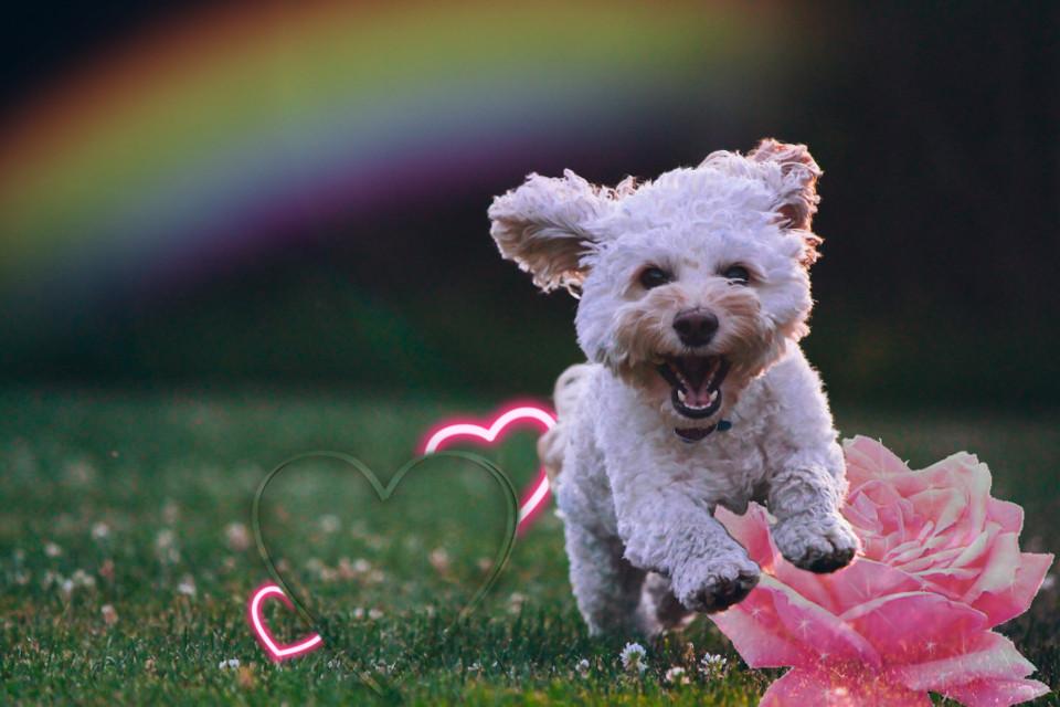 #freetoedit #perro #corazones #flores #flor #arcoiris #colores #luz #brillos #pasto #naturaleza