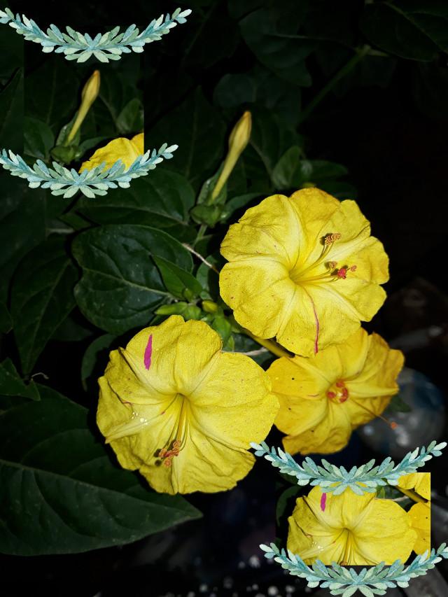 #flor #flower #amarillo #yellow #night #noche #edit #nature #naturaleza