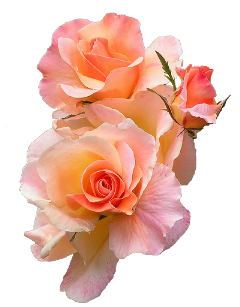 floral flower spring peach orange freetoedit