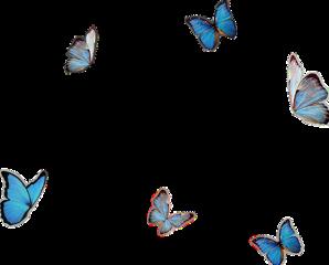 蝴蝶 butterfly instagram instastory freetoedit