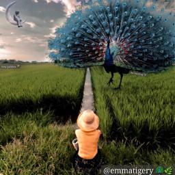 freetoedit girl challenge peacock field ircstopandstare stopandstare