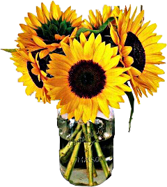 yellow sunflowers bouquet flowers jar freetoedit