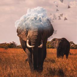 freetoedit headintheclouds elephant aesthetic safari srcheadintheclouds