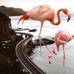 freetoedit pink cliff doubleexposure dtsdk ecgiantanimals
