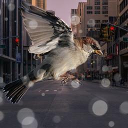 bird freetoedit ecgiantanimals giantanimals