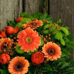 freetoedit praying orangeflowers honeymg444