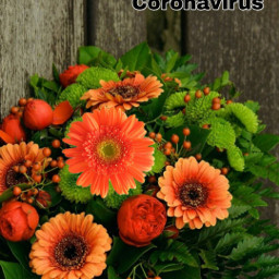 freetoedit praying coronavirus orangeflowers honeymg444