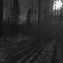 freetoedit challengeedit blackabdwhite forest haunted pcblackandwhite blackandwhite