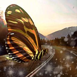 freetoedit largeanimalchallenge butterfly road sparkle ecgiantanimals giantanimals