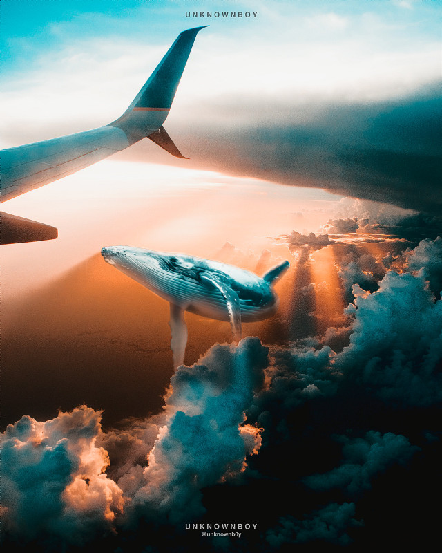 #freetoedit ❤️ P A R A D I S E ❤️ . . . . #mishik #ocean #clouds #whale #madewithpicsart #myedit #picsartedit #sky #cloud #aeroplane #airplane #inside #floating #float #shadow #sky #love #colours #height #sunset #sunrays #sunlight #lights #light #effect #manipulation