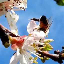 freetoedit flower sky