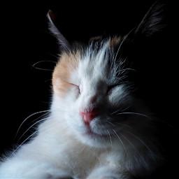 freetoedit cat catslovers lights gato pclightingthedark