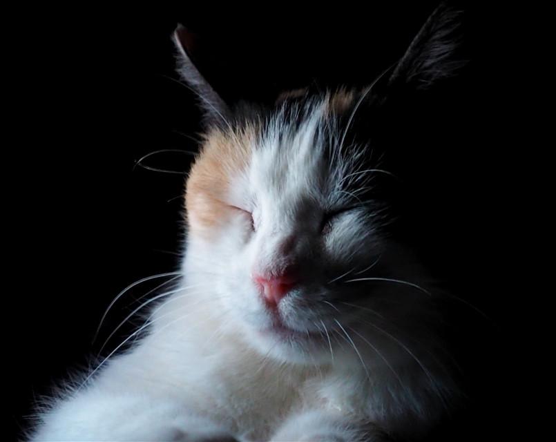 #freetoedit #cat #catslovers #lights #gato #cute #ilumina #ilumination #night #effects #animal #felino #kitty #luz #photo #Nair #mycat #catsofpicsart #photography #darkart  #photobyme #photonature #minimal #minimalphotography #black #negro #white #blanco #minimalism #photoshoot #photographylife #myphoto #picture #photographybyme #lovely #noche #dark #catsphotography  #pclightingthedark #lightingthedark