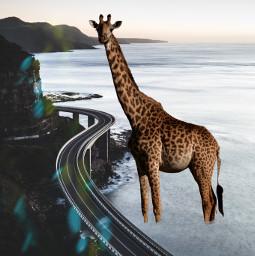 freetoedit ecgiantanimals giantanimals