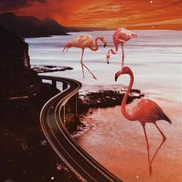 freetoedit flamingo road sea photoedit ecgiantanimals