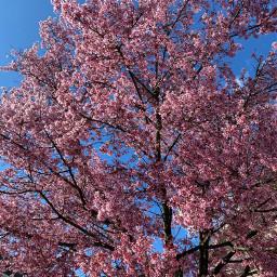 pcspringinyourcity springinyourcity spring photography