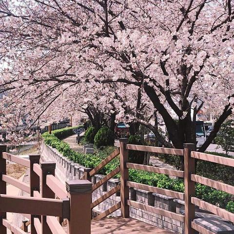 #想见你,#pcspringinyourcity,#springinyourcity,#spring,#photography